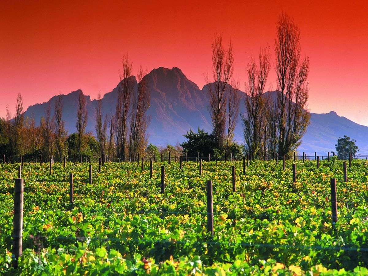 10 most charming tourist attractions in south africa the for Jardin wine south africa