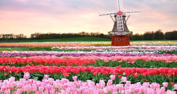 Landmark Tulip Festival A Magnet For Tourists The Romania Journal - Holland tulip festival