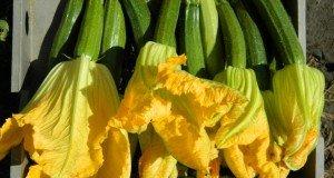 cum-sa-folosesti-florile-in-retete-sfaturi-de-la-claudia-romana-rista-fata-care-gateste-cu-flori_12