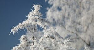 frost freezing cold