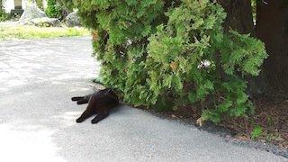 Tuesday's black cat