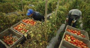 agricultura-ecologica-organic