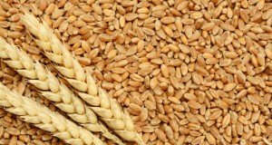 wheat-exports