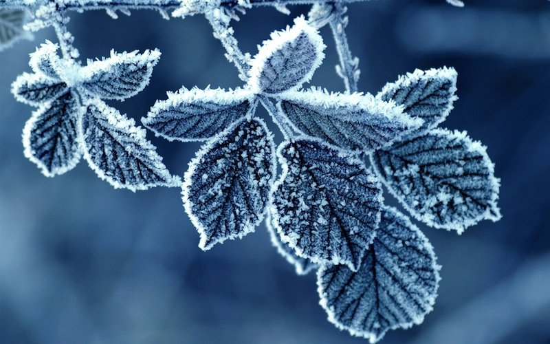 frost-leaves