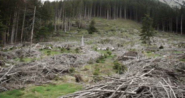 forests paduri taiate