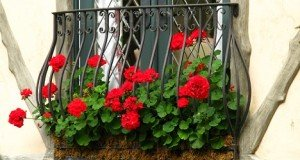 facade flowers