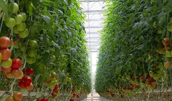 Romania's largest greenhouse