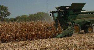 grain producer