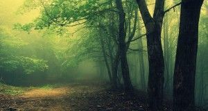 The first documentary about the Hoia-Baciu forest available by year end