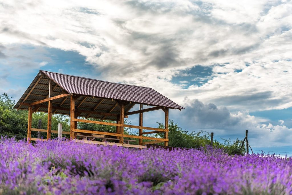 Top five lavender events in Romania this summer – The